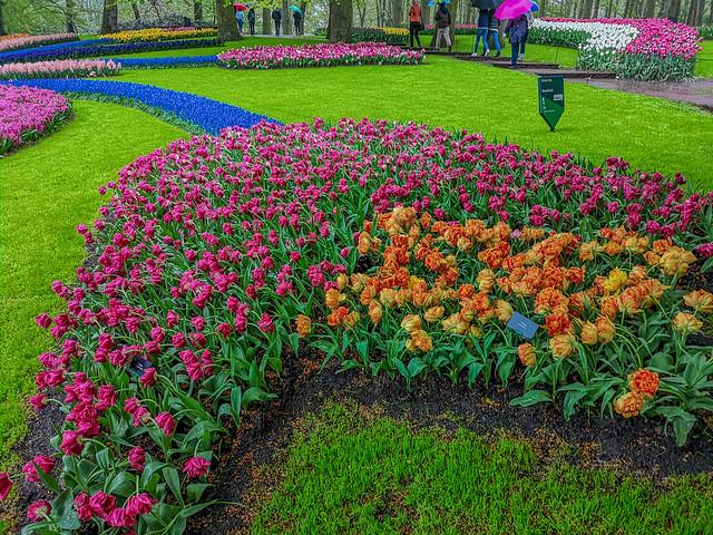 Forming flower patterns in Keukenhof Tulips Garden in the Netherlands.