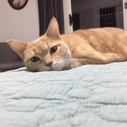 gatinho gosta da colcha