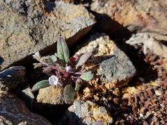 Unidentified small tubular white flower 2