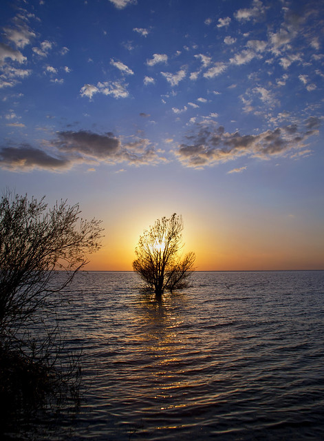 A Tree in the Lake