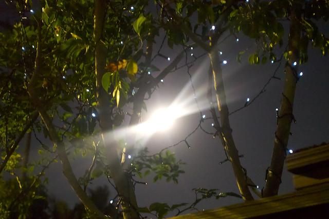 Tree with fairy lights + full moon. Sydenham, Sydney.