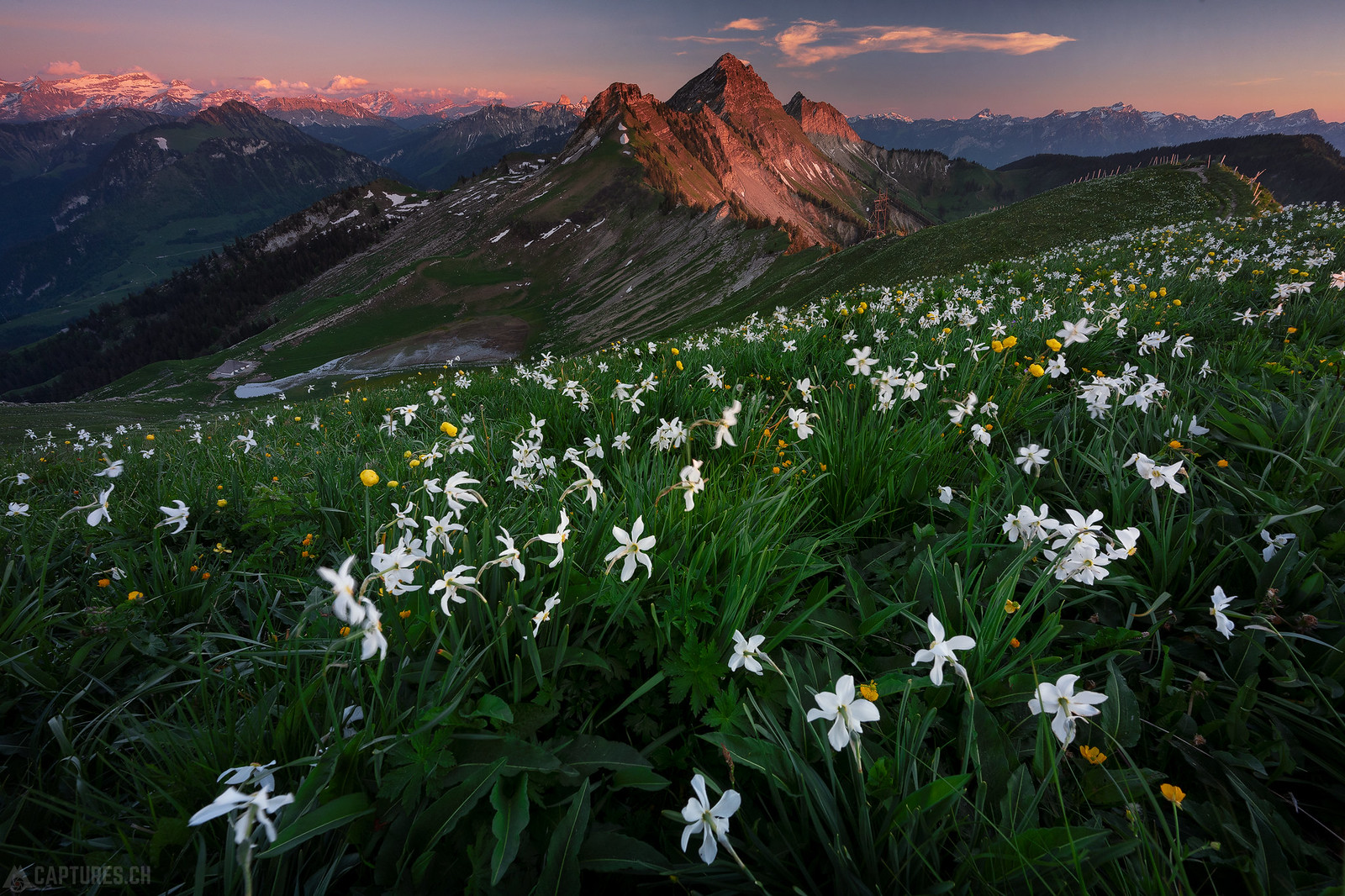Sunset in the flowers - Col de Lys