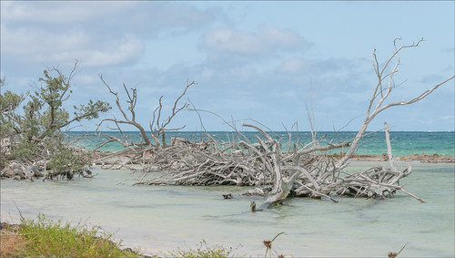 Image of deserted beach on Spanish Cay in the Bahamas