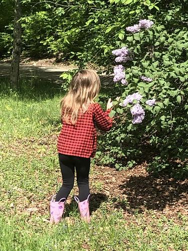 lilac season