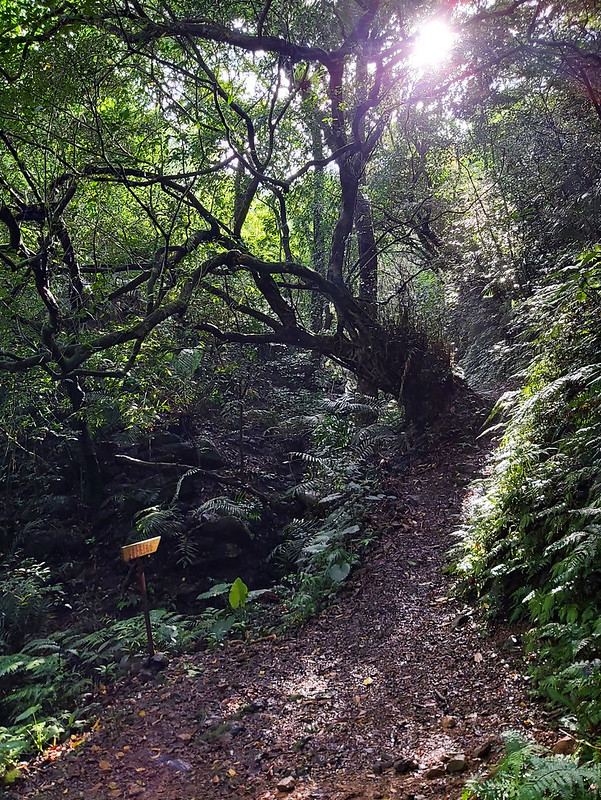 Hiking Resources: Light coming through the woods