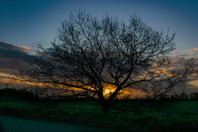 A Tree-Framed Sunrise