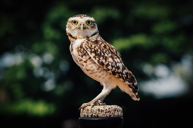 Sometimes, you just need a bit more owl in your life