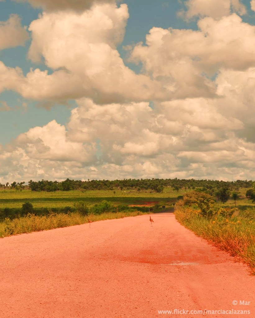 Estrada do Pantanal. Mato Grosso do Sul. Brasil.