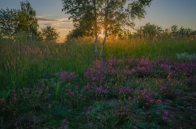 Time of meadows...