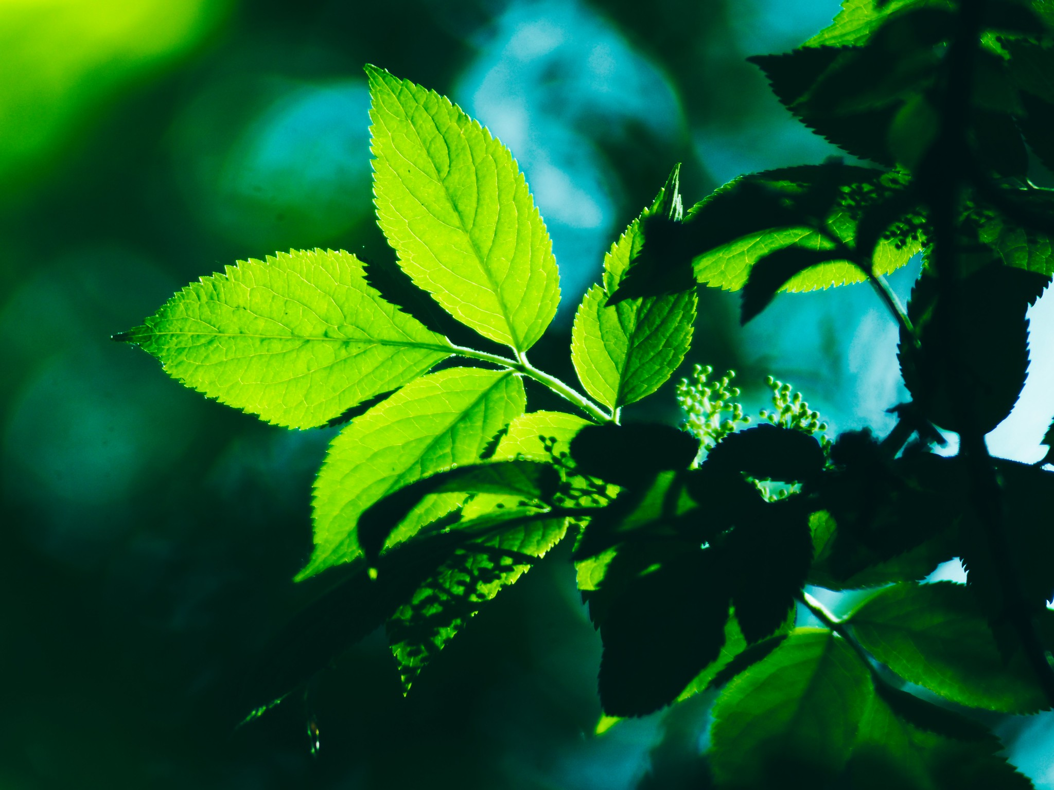 Green and light bokeh | May 31, 2020 | Schleswig-Holstein - Germany