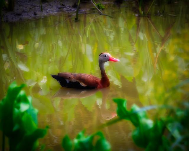 Ducky Wucky