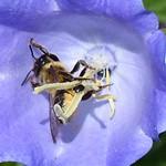 2020-05-31 Garten, Insektenzählung (31a)