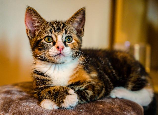 Lola the Kitten