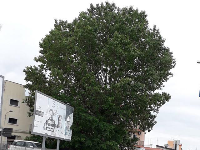 albero-via-donnola