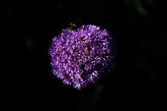 Bloom28