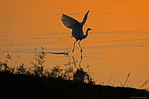 heron dusk sunset florida birds birdphotography nature fujifilm