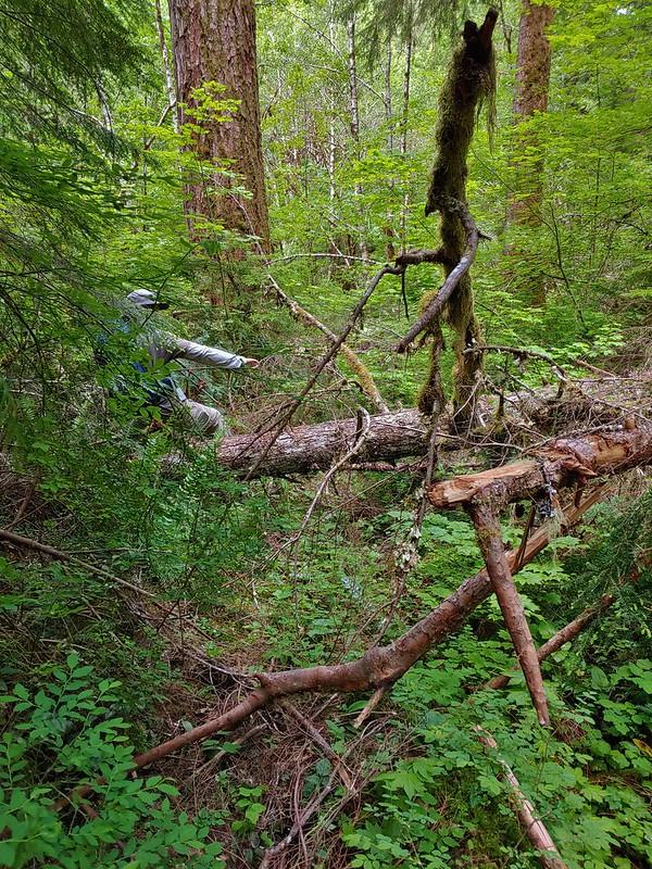East Fork Trail under blowdown
