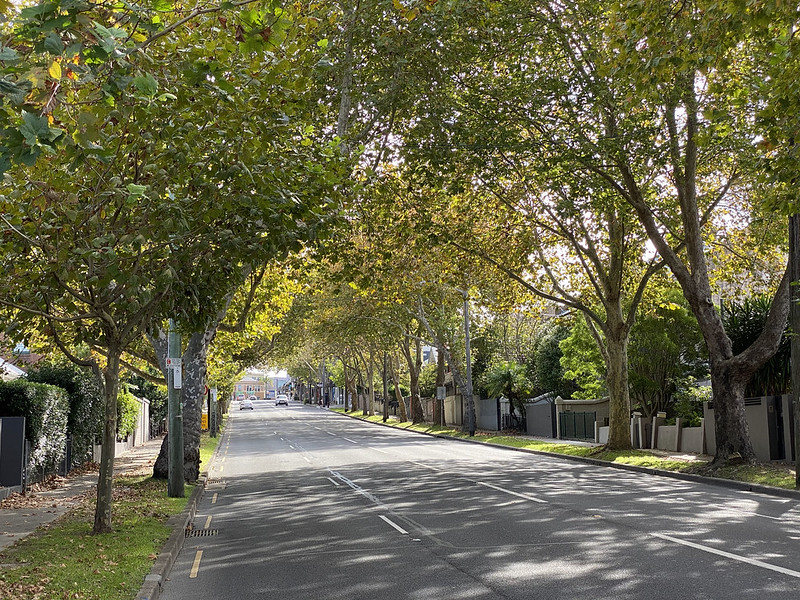 Falcon Street autumn