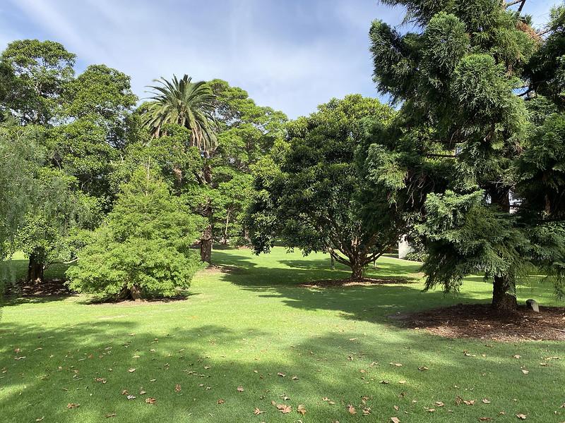 St Leonards Park trees