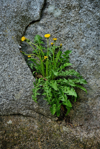 eechillington nikond7500 viewnxi bellscanyon rocks plants hiking nature