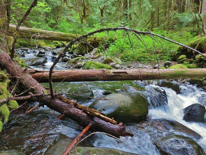 East Fork South Fork McKenzie River