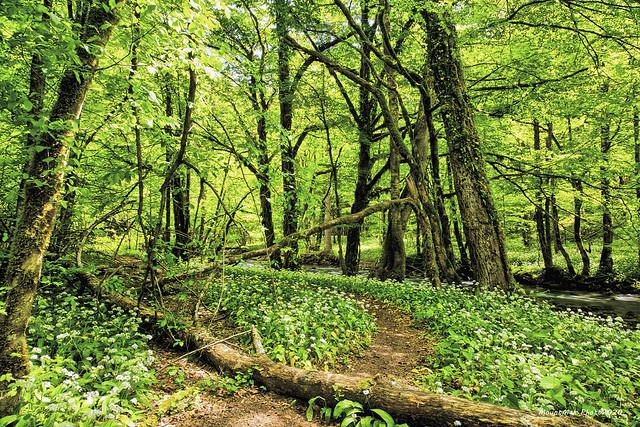 Potok Curak - staza kroz šumu pokraj potoka
