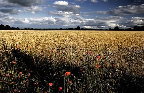 ©lowresolutionpreview summer skyscape sky kildare ireland field 72dpipreview best flickr hugh dempsey