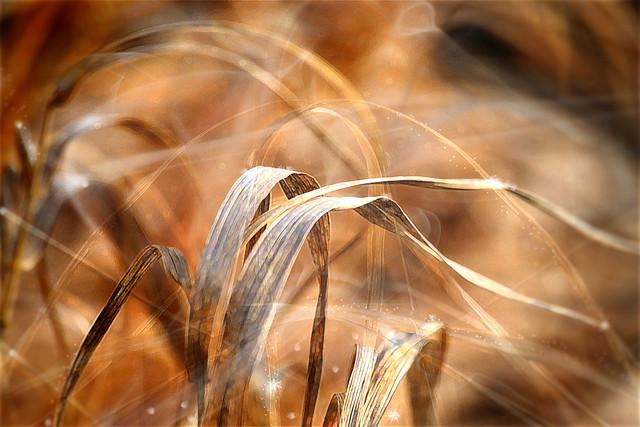 Golden Grass. A Slider :-)
