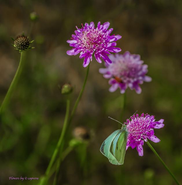 Nature Beauty's Nature