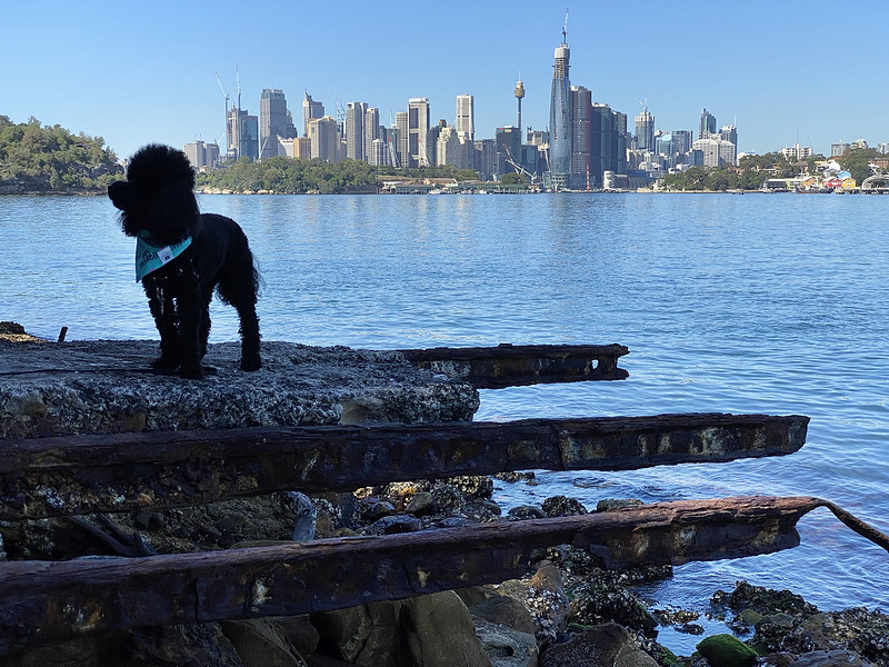 Scully at Manns Point