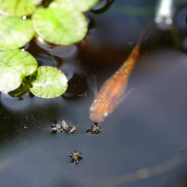 2160x2160 Mini Pond 20200607