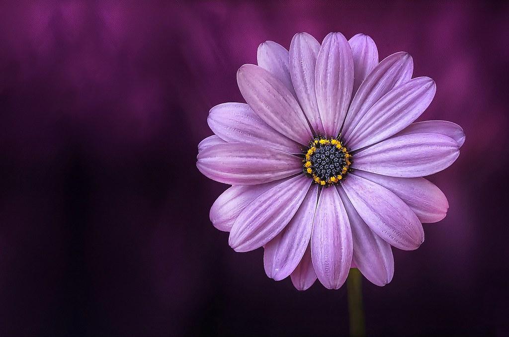 flower-729512
