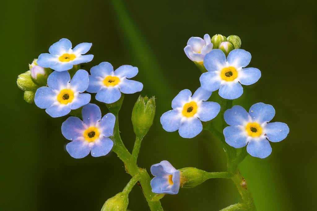 Auf der Blumenwiese (1)