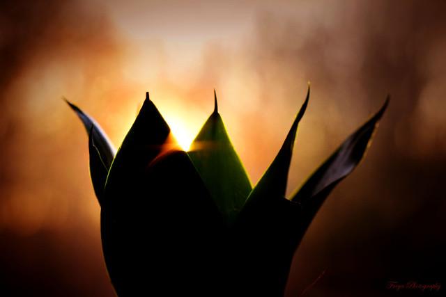 Light persists...