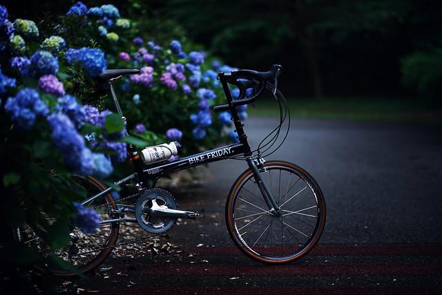 紫陽花&BIKEFRIDAY