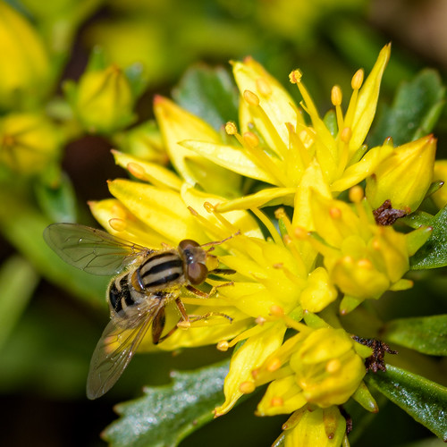 200mmf4dmikronikkor minnesotalandscapearboretum nikond500 closeup macro ©walterpolley
