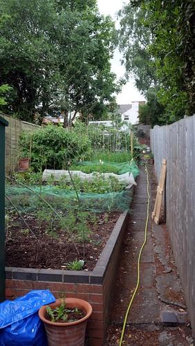 Back Garden - 1