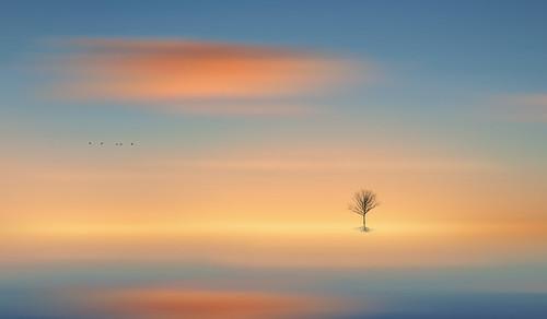 lonely tree silhouette minimal landscape sunset sunrise flowing glowing flowingandglowing glowingandflowing