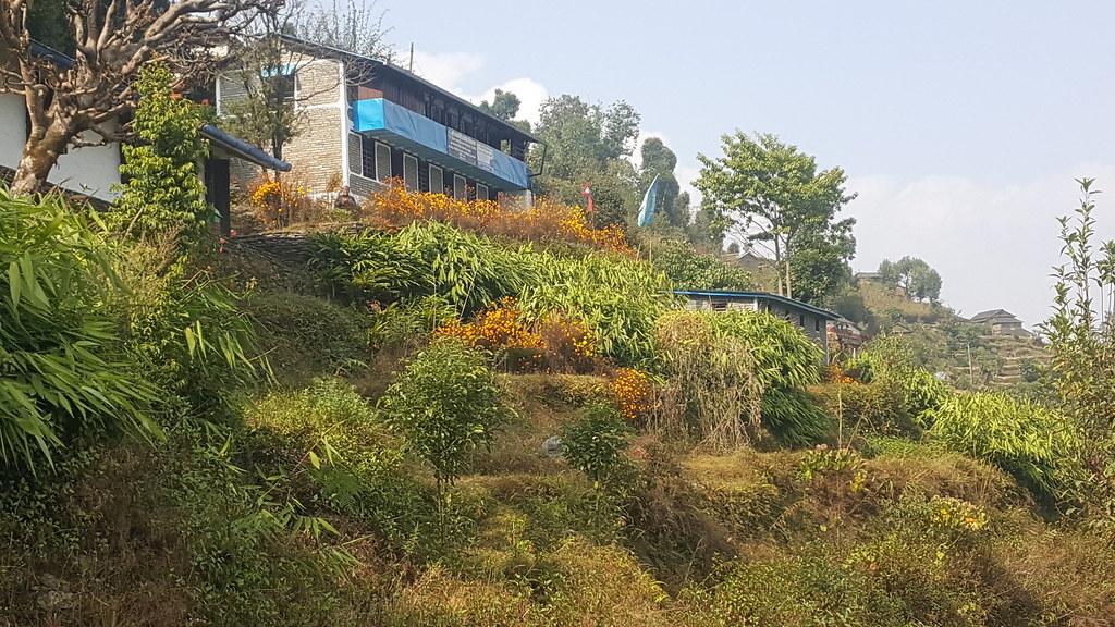 IUCN在尼泊爾潘切斯地區實施山地EbA計畫,保護森林集水區和水資源。圖片來源:Anu Adhikari/IUCN (CC BY-NC 2.0)