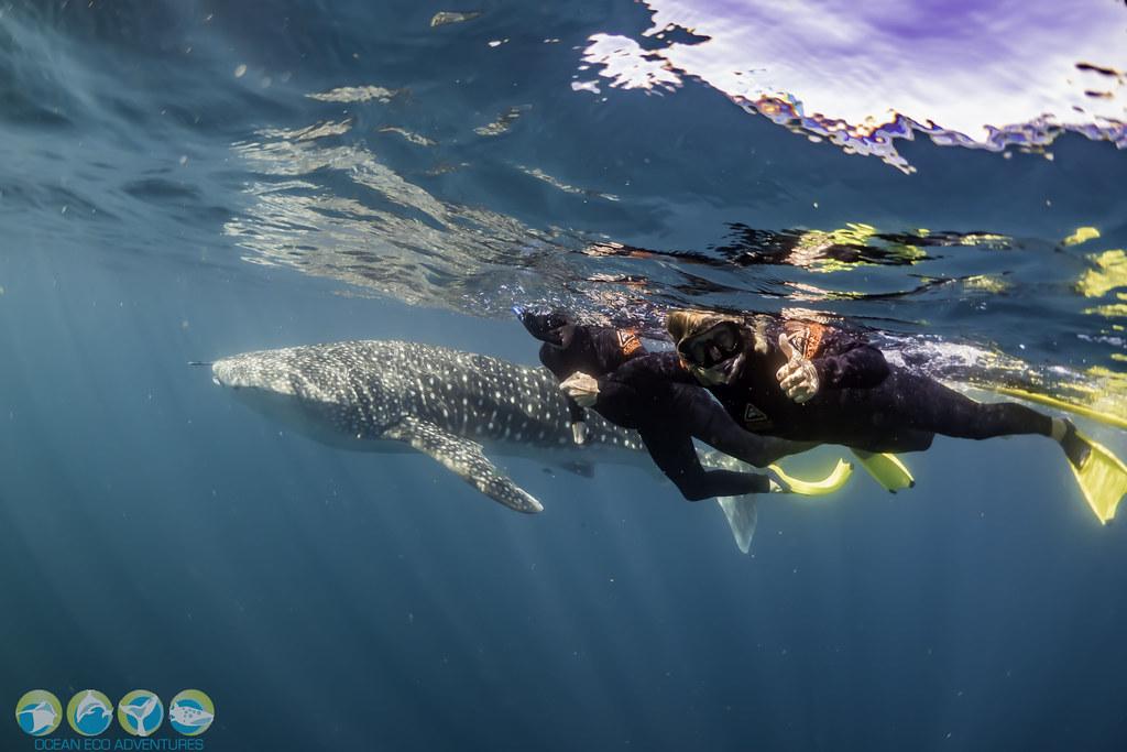 Untitled Ocean Eco Adventures Flickr