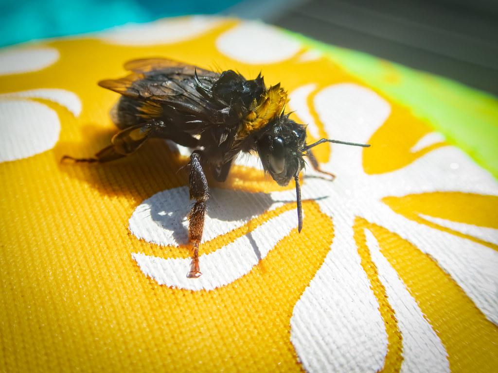 L'abeille Moïse... 49981312842_86d300136d_b