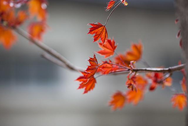 L'automne semble s'inviter au printemps