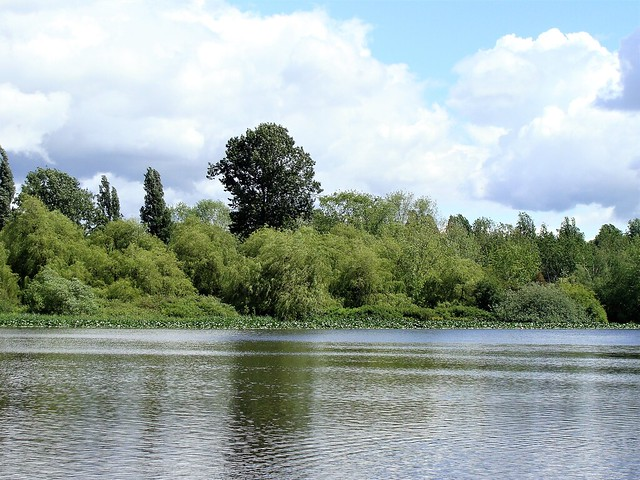 Trout Lake in the Spring