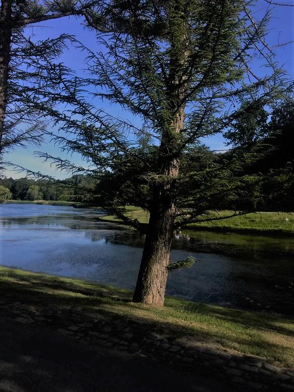 Naturaleza en Lovaina (3)