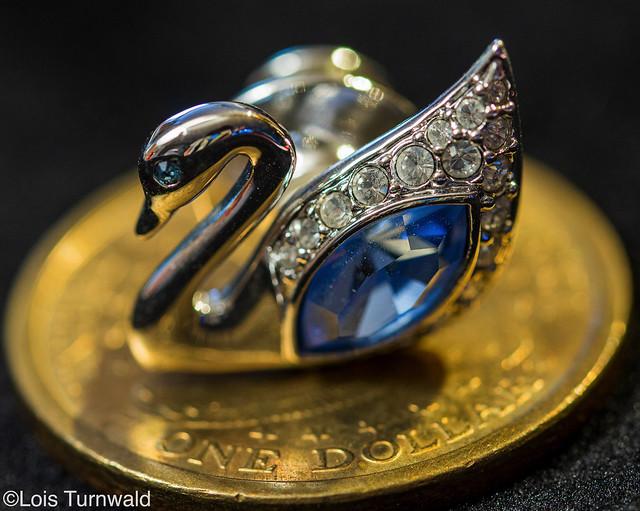 Swan on a Golden Coin - HMM