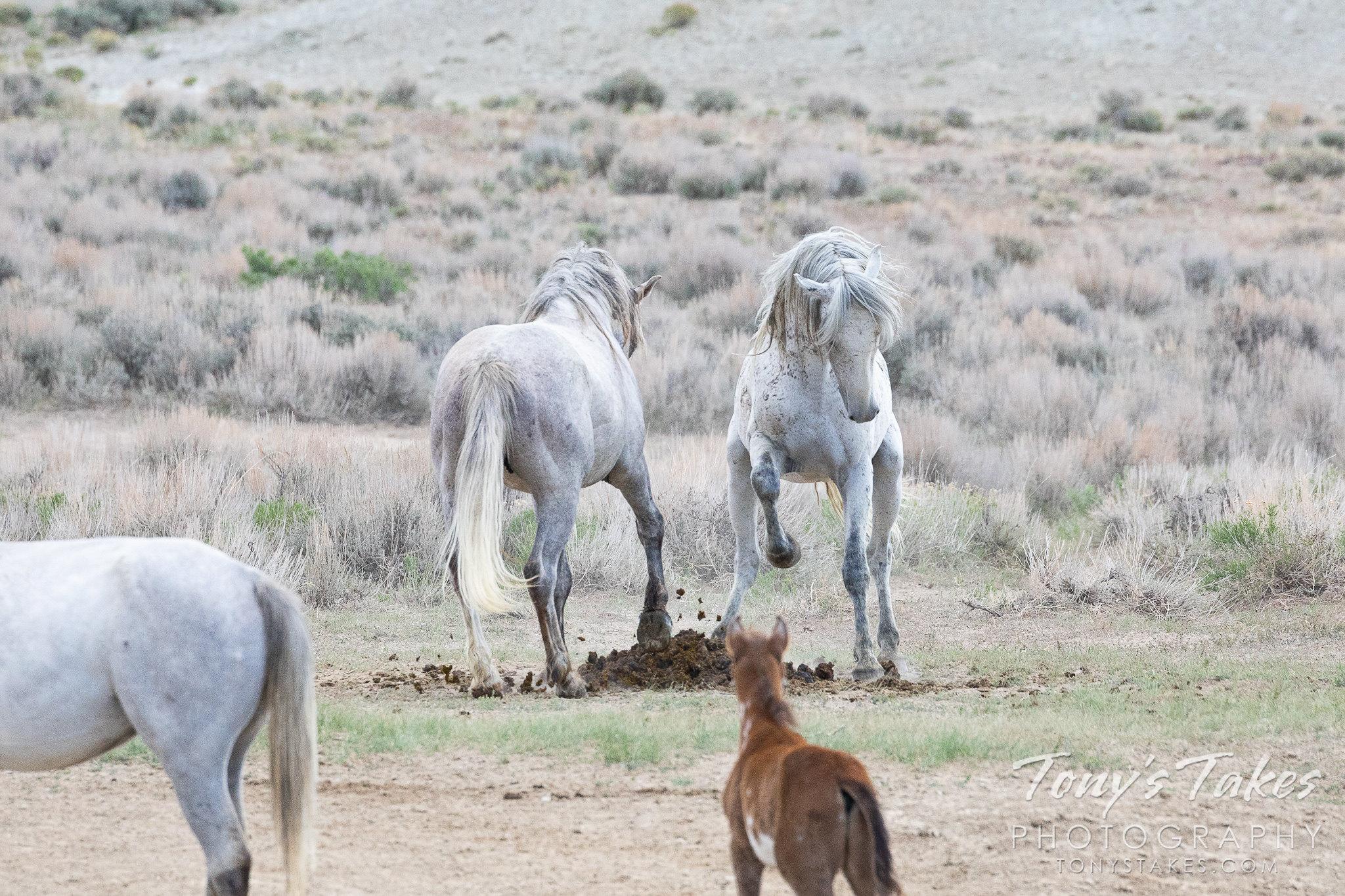 Stallion delivers devastating blow to opponent