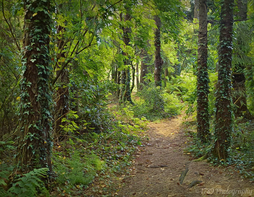 old trees light wild forest dark woods flora outdoor bears vivid fantasy snakes colour art artwork path hike trail