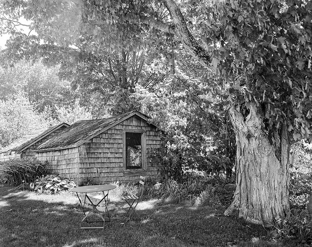 Old Chicken Coops and Tree