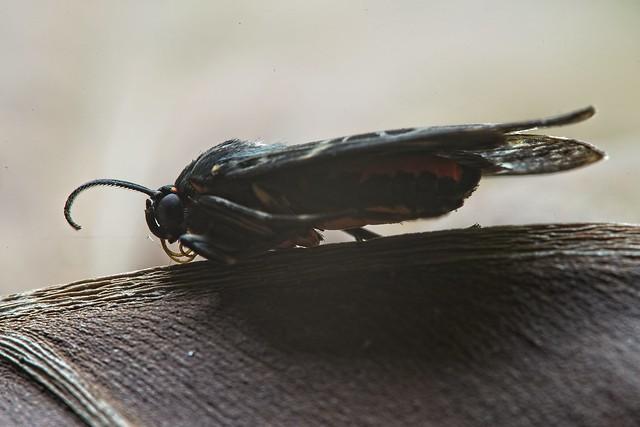 Mariposa de 1 cm