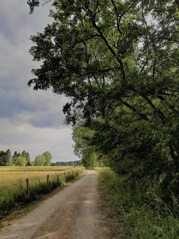Naturaleza en Lovaina (11)